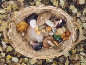 psilocybin-mushrooms-microdosing
